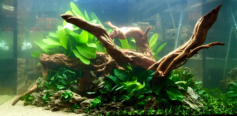 aquascaping-holz-832x409