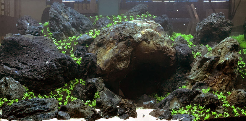 aquascaping-stein-832x409