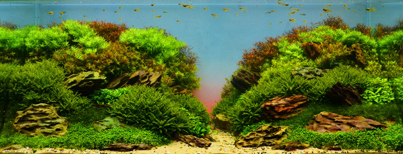 Aquascaping_796x304